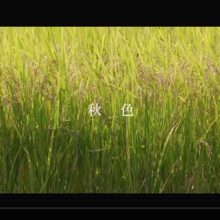 映像・動画制作サンプル「秋素材01」